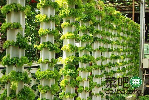 阳台种菜怎么浇水