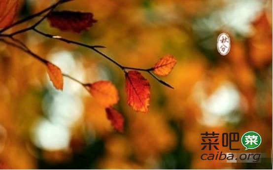 秋分树木卡通素材