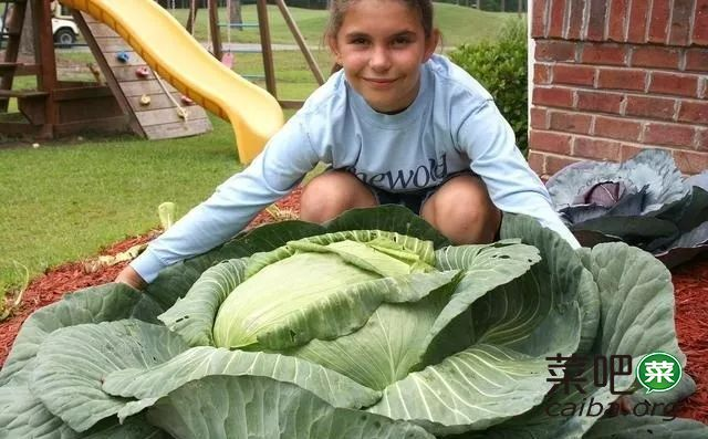 9岁女孩用菜园改变世界,永远不要低估孩子的力量!
