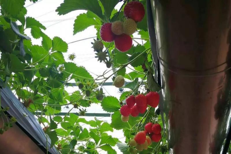 水培蔬菜如此受欢迎,无土栽培技术却如此简单