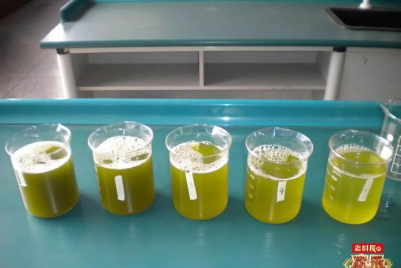 这三名小学生发明了可以杀死蚜虫、菜青虫、小菜蛾的绿色