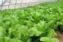 夏季蔬菜管理技术要点