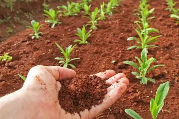 有机农业,是一件昂贵但靠谱的事