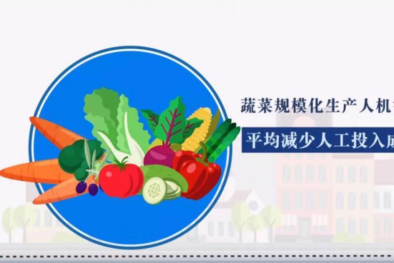 中国蔬菜领域首创!这项技术的出现,真的会让农民集体失